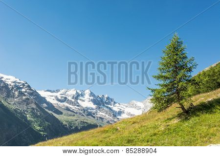 Lonely Tree On A Mountain Meadow.