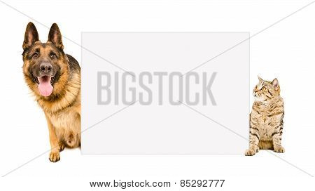 Dog and cat sitting behind poster