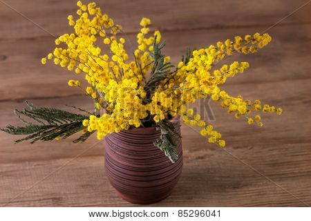 Mimosa In A Vase