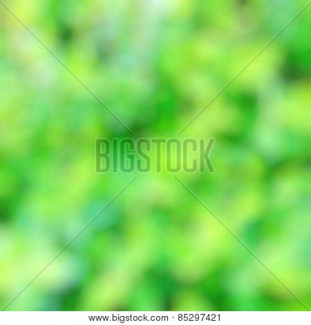 Blurred Greenery Background