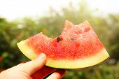image of watermelon slices  - Fresh slice of watermelon in hand on sunny nature background - JPG
