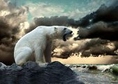 picture of polar bears  - White Polar Bear Hunter on the Ice in water drops - JPG