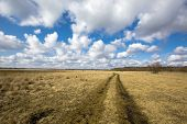 picture of steppes  - Rut road in steppe under nice clouds in sky - JPG