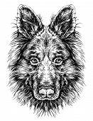 picture of shepherds  - Sketch of Dog Shepherd - JPG