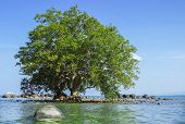 picture of tide  - Mangrove in area of low tide and high tide - JPG