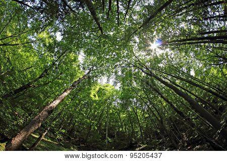 Inside Forest