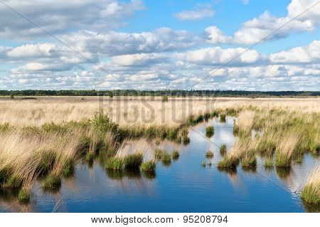 Blue Sky Over Swamp Water