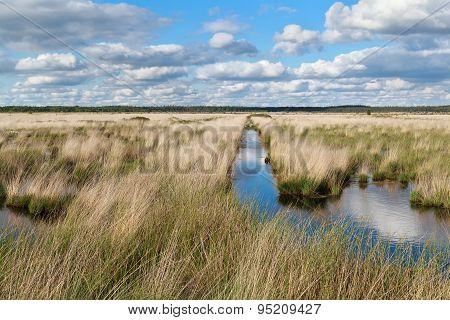 Blue Clouded Sky Over Swamp