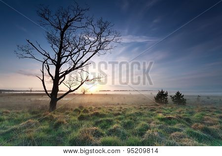 Tree On Meadow And Sunrise