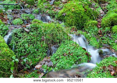 Little River In Green Forest
