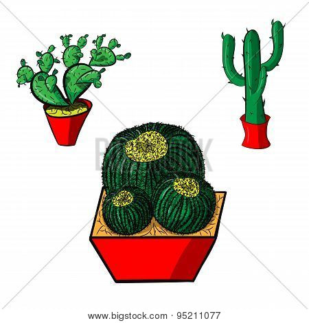 Set Of Mexican Cacti On A White Background