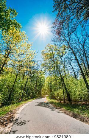 Good Asphalt Forest Road In Sunny Summer Day. Lane Running Throu