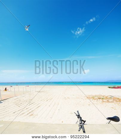 Bike And Seagulls In Alghero Lido