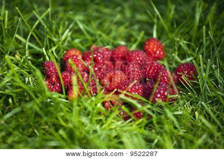 Fresh rasberries on a grass