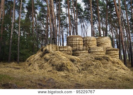 Hay After Harvest.