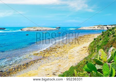 Plants And Rocks By The Shore In Sardinia