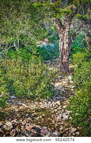 Rocky Path In The Wood In Hdr