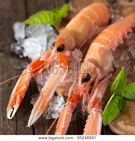 Raw Langoustines On Ice With Basil
