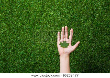 Human hand holding tree leaf