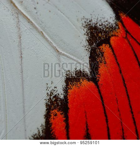 Red Butterfly Wing