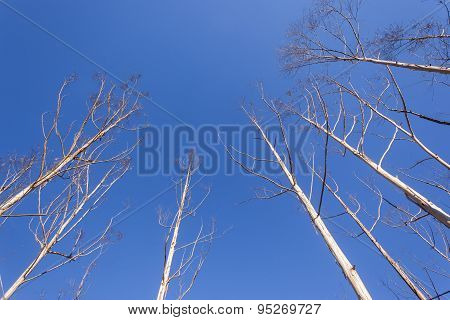 Dry Trees Blue Landscape