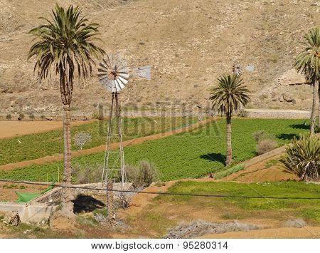 Agricultural landscape on Fuerteventura
