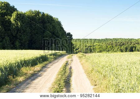 Earthen Road In A Wheat Field