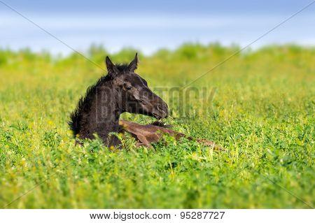 Foal rest
