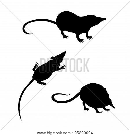 Vector silhouettes of a shrew.