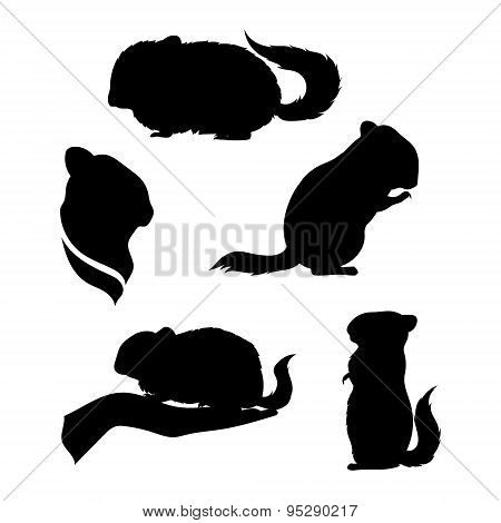 Vector silhouettes of a chinchilla.