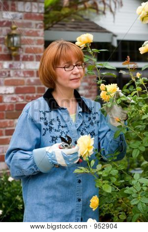 Women Takes Care For Roses On Frontyard
