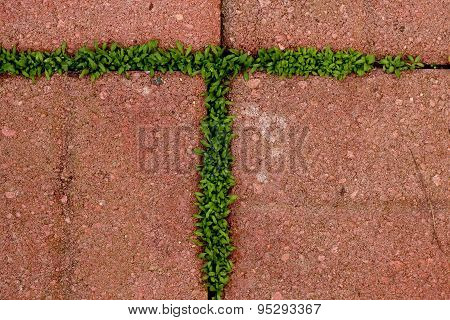 Letter T Formed by moss growing between bricks