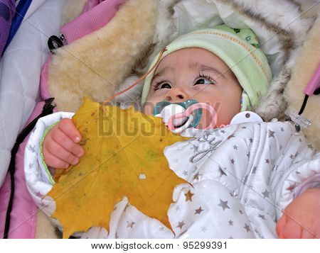 Small Child Is Holding Leaf Of Yellow Maple