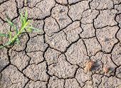 picture of dry grass  - Dry cracked ground with some stone and grass able to use in concept of hot weather - JPG