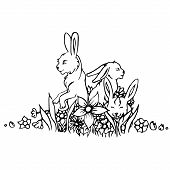 image of hare  - Black and white rabbit isolated - JPG