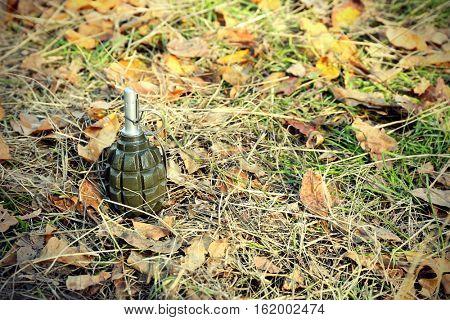 Hand grenade on green grass