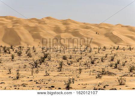 outdoor dry sand pattern dune in oman old biggest desert rub al khali