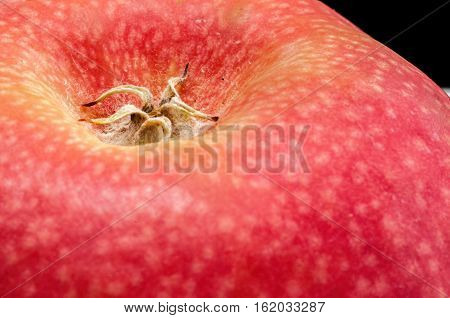Closeup view of a red apple's calyx structure - a remnant of its earlier flowering stage of fruit development. High-resolution image.