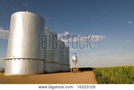 Silo de grano en Arizona con cielo azul y el cultivo de maíz