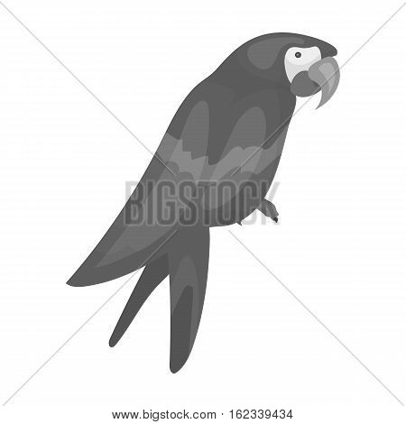 Pirate's parrot icon in monochrome style isolated on white background. Pirates symbol vector illustration.