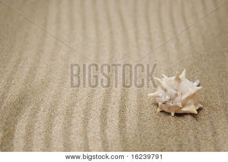 sea snail in the sand
