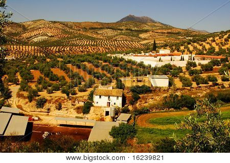 countryside in andalusia,spain