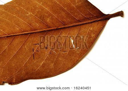 written fall on the leaf