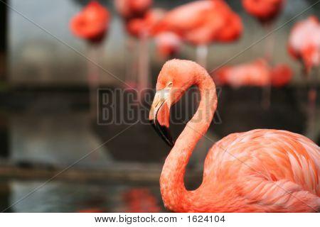 Flamingo Partei