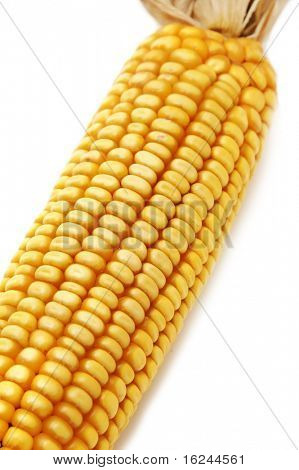 a corncob isolated on a white background