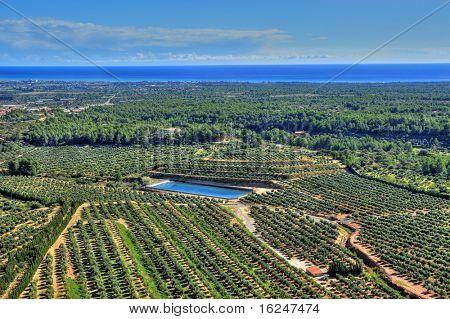 aerial view of olive groves in Costa Daurada, Spain