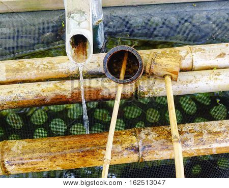 Japanese Ladles In Shinto Temple