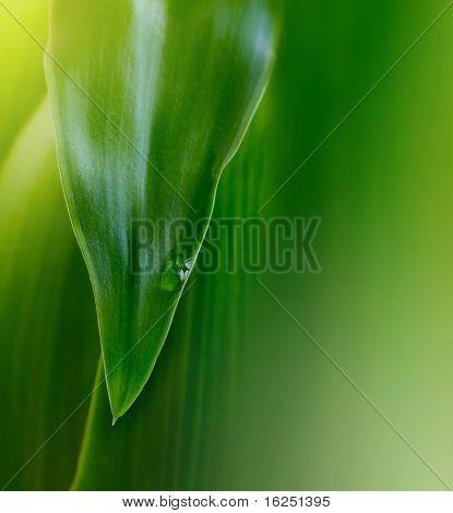 grünes Blatt Hintergrund mit Wassertropfen