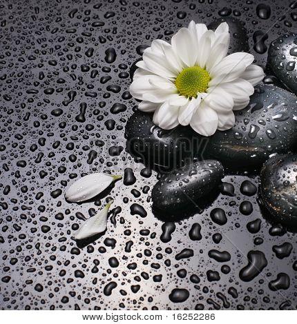 pedras pretas e flor branca com gotas de água