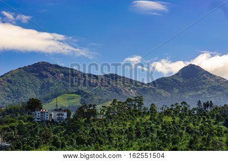 Plants and flowers in Munnar Kerala Idukki district India